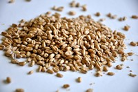 Wheat Malt (British)