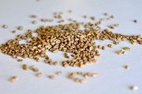 Wheat Malt, Pale (German)