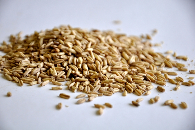 Oats, Malted (British)